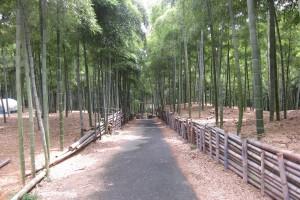伏見の竹林青木の滝 動画つき