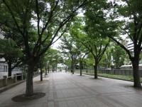 大阪中之島公園にちょっと寄りました