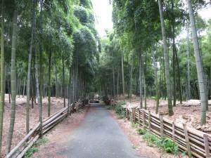 京都伏見の青木の滝の竹林です