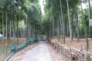 京都伏見の竹林と伏見稲荷 2月