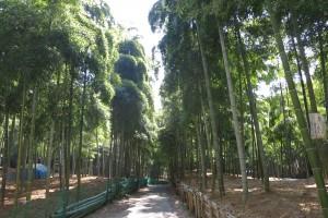 伏見の竹林と伏見稲荷