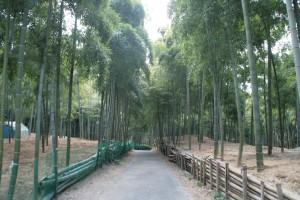 京都伏見の青木の滝・竹林と京都植物園に行ってきました。