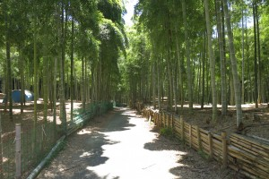 6月です。京都伏見稲荷、青木の滝に参拝です