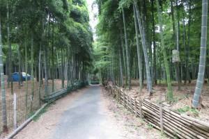 8月です。伏見の青木の滝と伏見稲荷大社参拝です