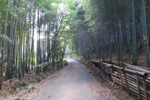 京都の伏見稲荷大社と青木の滝に参拝です。