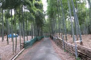 伏見の青木の滝に参拝してきました