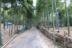 伏見稲荷大社と青木の滝に参拝いってきました