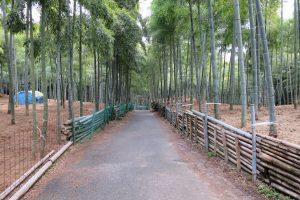 3月です。毎月の恒例、伏見青木の滝に参拝です