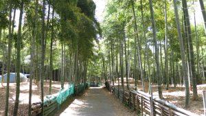 伏見の竹林 青木の滝に行ってきました