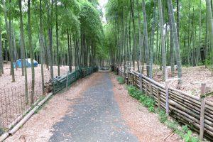 7月です。伏見の青木の瀧に行ってきました。