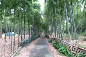 8月です。伏見稲荷大社と青木の瀧参拝です