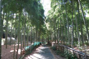 伏見青木の滝に参拝してきました