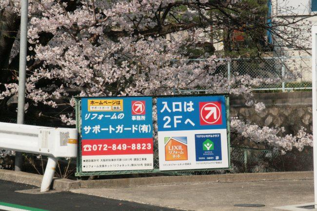 サポートガードの事務所前の桜が満開です