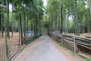 京都伏見稲荷青木の滝に参拝です