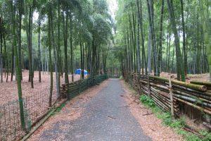伏見稲荷大社と青木の滝・竹林に参拝してきました