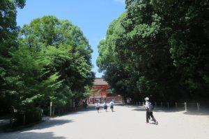 京都糺の森にいきました