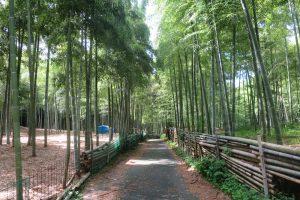 7月になりました。伏見稲荷大社青木の滝に参拝してきました