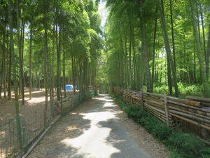 盛夏8月です。毎月の恒例、伏見稲荷大社 青木の滝に参拝です