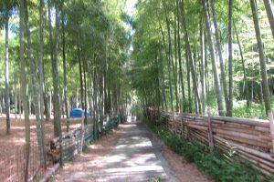 9月です。伏見稲荷大社青木の滝に参拝です。
