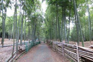 10月です 伏見稲荷大社、青木の滝そして京都植物園に行ってきました