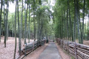 伏見青木の滝 久しぶりに英語つかいました