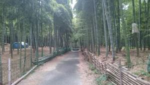 恒例の京都伏見稲荷大社と青木の滝に参拝してきました