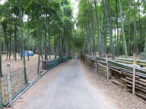 師走 12月です。伏見青木の滝に行ってきました。