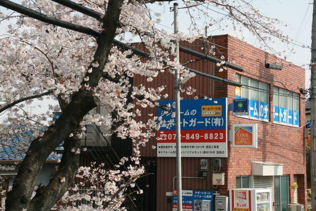 サポートガードの前の桜が満開です。