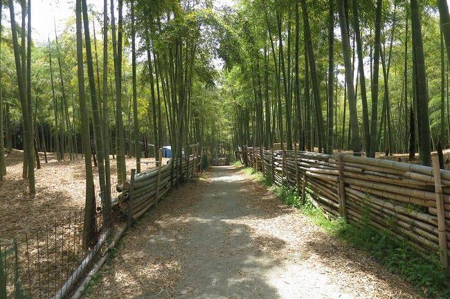 伏見稲荷大社青木の滝に令和になりはじめて参拝です
