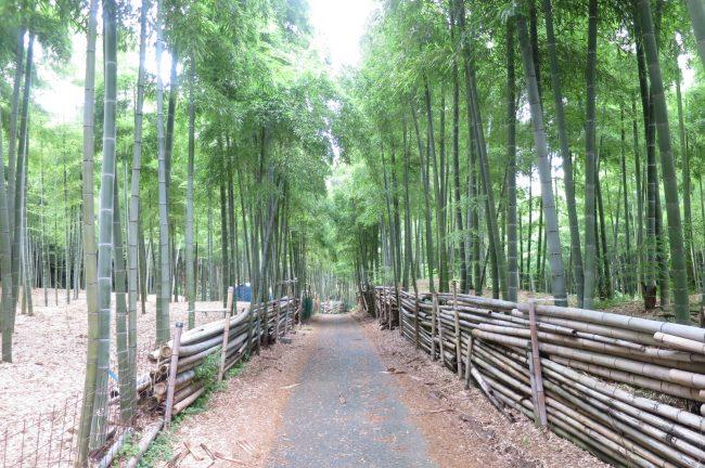 7月です。毎月の恒例行事。伏見稲荷大社青木の滝に参拝です