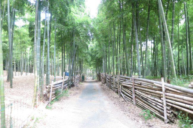 8月です。あつーーい夏です。伏見稲荷大社と青木の滝に参拝