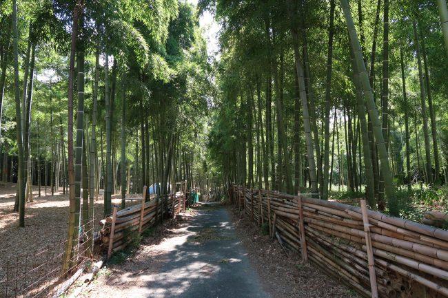 10月です。毎月の恒例、青木の滝・伏見稲荷大社参拝にいってきました