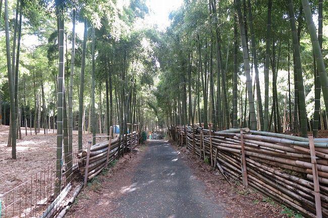 12月です。師走です。12月になったので毎月恒例の伏見青木の滝参拝です。