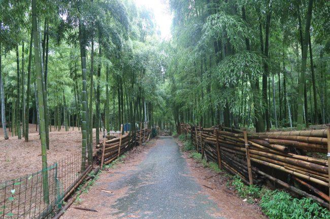 7月の伏見稲荷・青木の滝は雨でした。