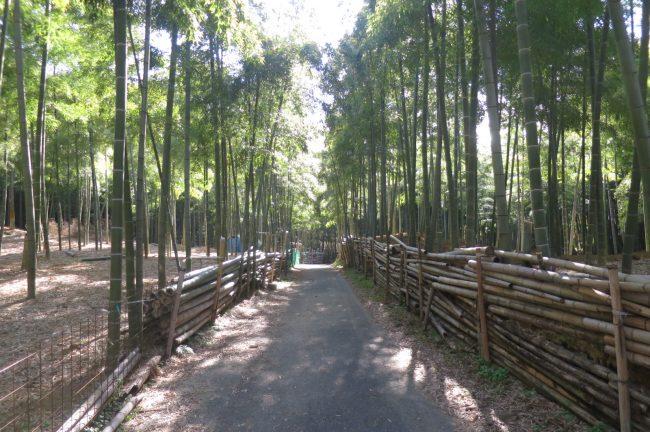 12月です。恒例の伏見稲荷、青木の滝に参拝です。