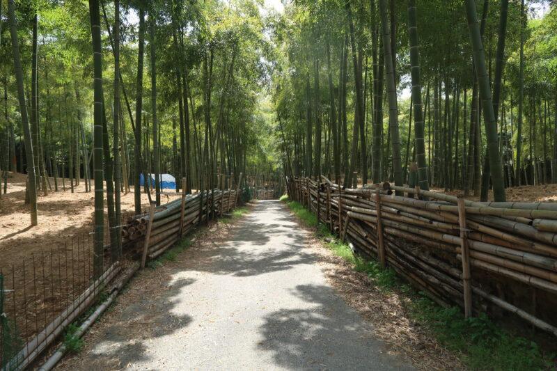 4月です。伏見稲荷青木の滝に参拝です