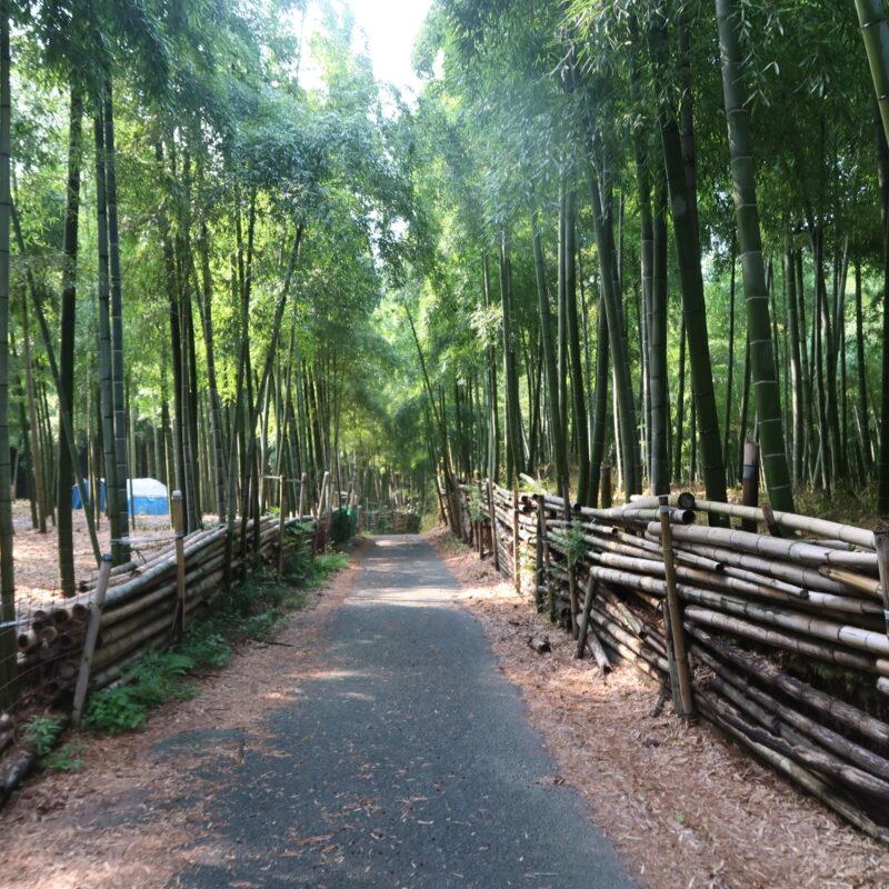 8月です。伏見稲荷青木の滝に参拝してきました